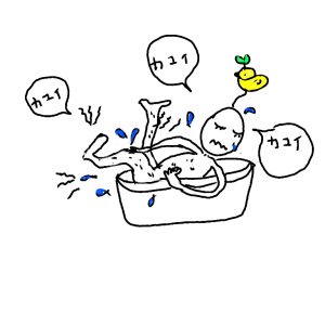 hoshitu